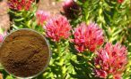 Настойка родиолы розовой для иммунитета