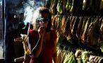 ГМО – еще одна причина бросить курить