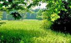 Люди, живущие в окружении зелени чувствуют себя счастливее