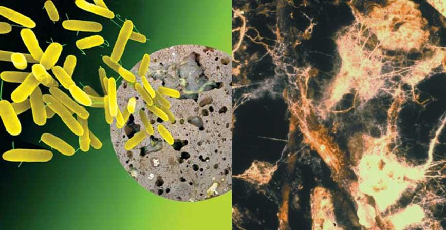 Вирусы и бактерии причины заболеваний промежности