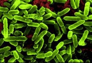 Бактериемия