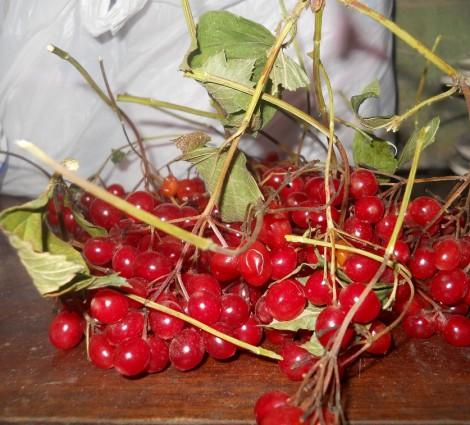Целебная ягода калина красная