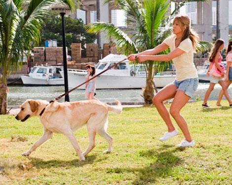 заведите собаку, чтобы похудеть быстро и безопасно